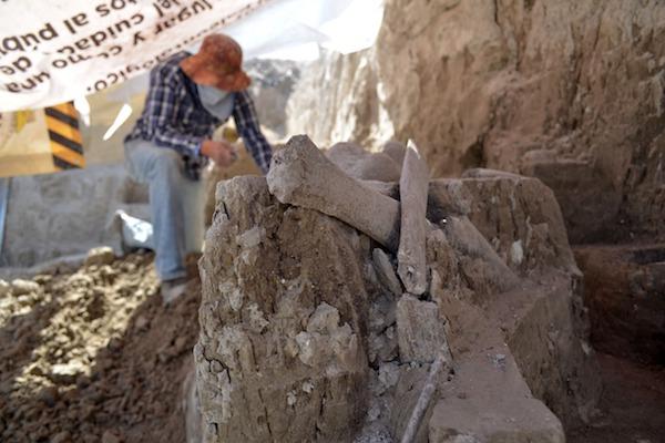 Restos de un  mastodonte en Tultepec, Estado de México. Foto: Especial.