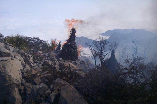 incendios forestales Nuevo León