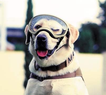 HOMENAJE. La labrador del cuerpo de binomios caninos fue despedida entre aplausos. Foto: Especial