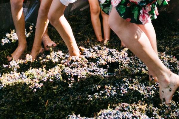 Entre viñedos, cavas y una excelente gastronomía