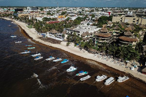 Turismo Quintana Roo Sargazo