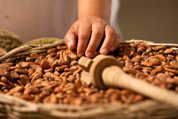 cacao, chocolate, México, Día Nacional, Senado,