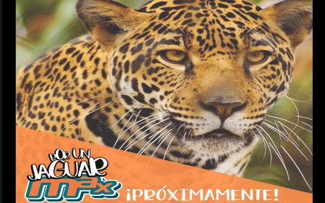 Tintorerías Max anuncia alianza con Animal Karma en pro del jaguar mexicano