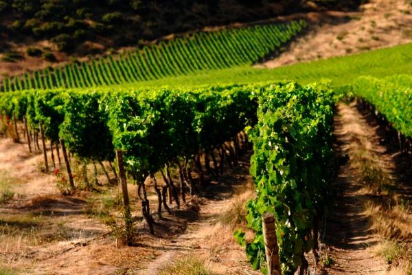 tips_como_seleccionar_vinos