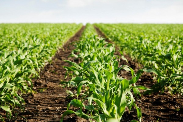 La organización que representa al sector privado del campo reitera que están de acuerdo con el apoyo a los pequeños productores. Foto: Especial
