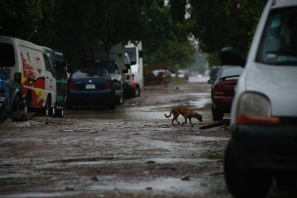 lluvias_sinaloa_frente_frio_socavon_evacuacion