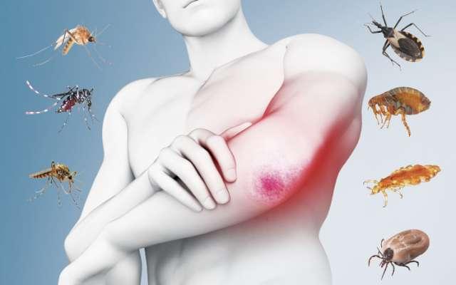 LYME. Es una infección bacteriana transmitida por las garrapatas. Infografía: Miguel Ulloa