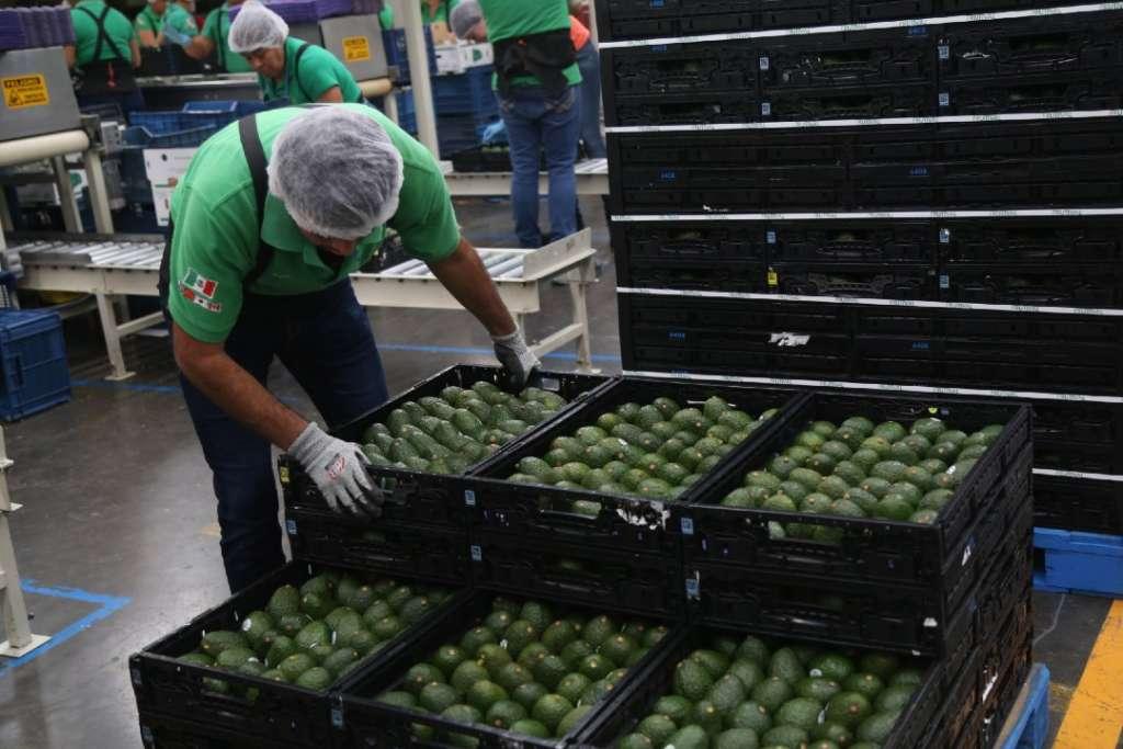 EU. Concentra 80 por ciento de las exportaciones agroalimentarias de México. Foto: Cuartoscuro