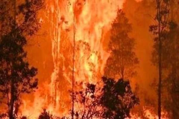 incendios_forestales_amazonas_brasil