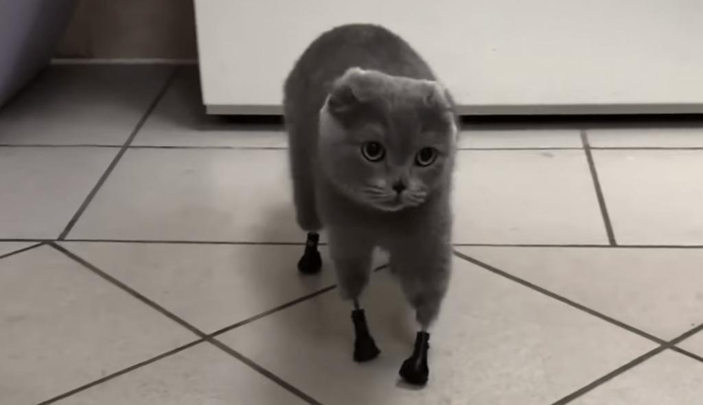gato piernas bionicas