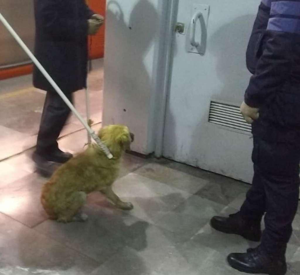El perrito se encuentra fuera de peligro y recibirá atención de un veterinario. FOTO: Metro CDMX