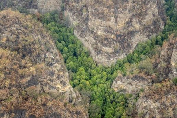 Rescatan árboles en Sídney tras incendios  FOTO:ESPECIAL (AFP)