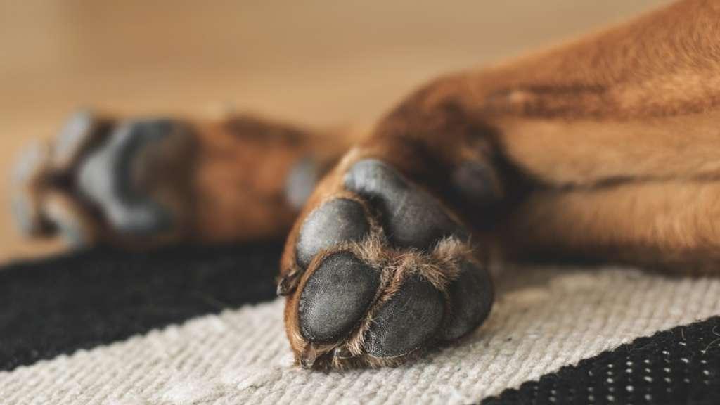 perrito-cara-niño-expresion-humana