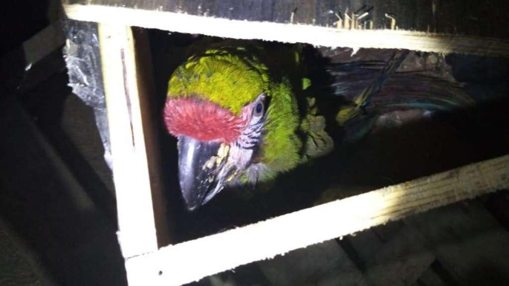 guacamaya trafico de animales merida aeropuerto