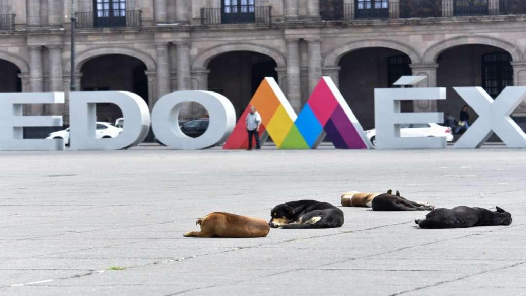 Envenenan a perros en Estado de Mexico