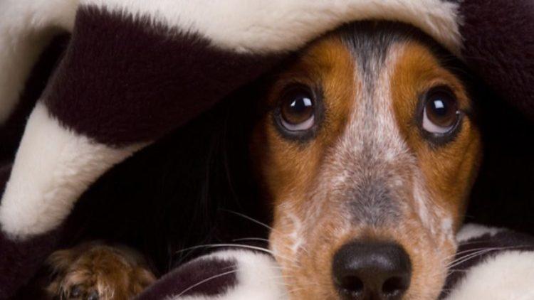 perro-asustado-cohetes qué hacer
