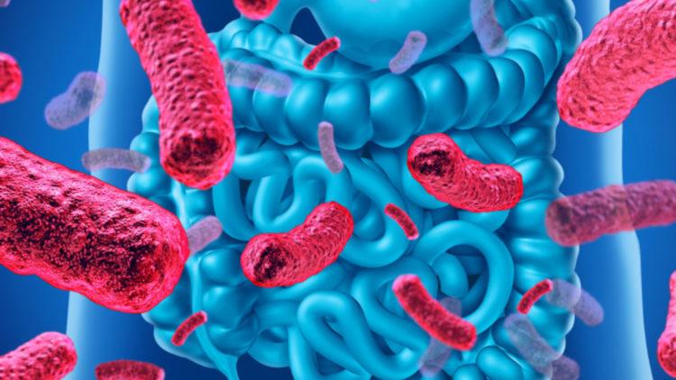 microbiota, bacterias, intestino,